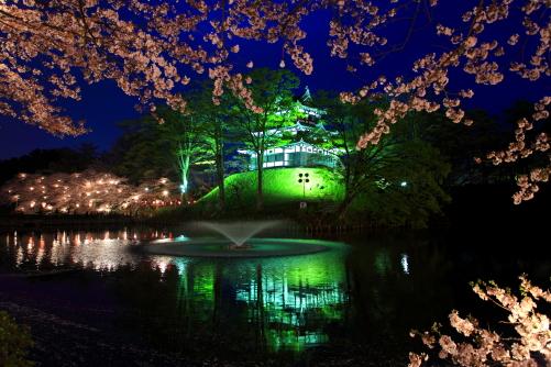 堀の桜とライトアップの天守閣