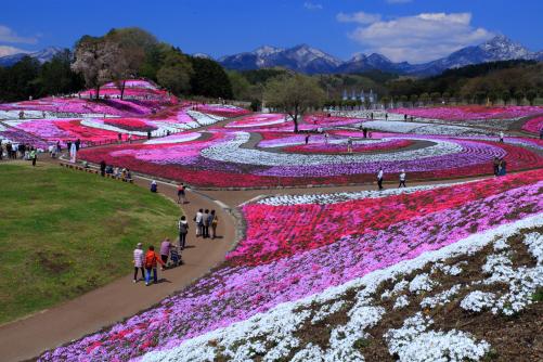 みさと芝桜公園-Ⅰ