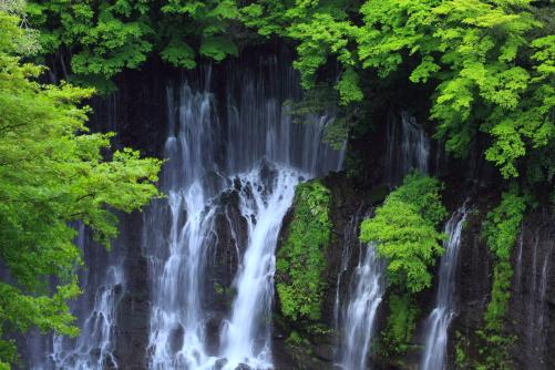 若葉の彩る白糸ノ滝