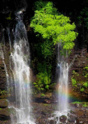 滝と若葉と虹