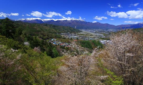 桜と若葉と高遠市街地の背後に中央アルプス