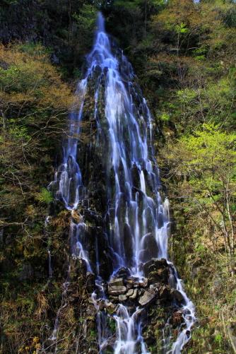 芽吹く山肌を落ちる樽滝