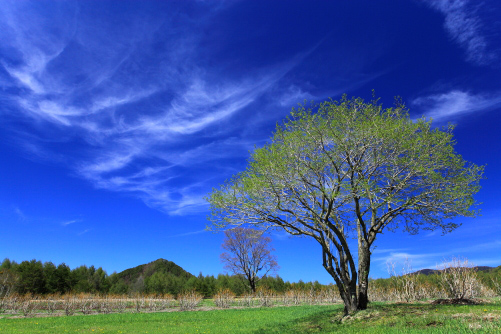 若葉の木立と雲の映える風景