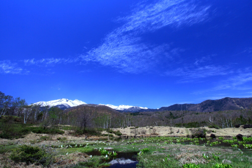 ミズバショウ咲く乗鞍高原から雲の映える乗鞍岳を望む