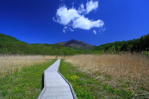 湿原の初夏の風景 戸隠にて