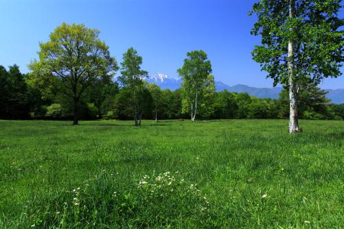 緑色の草原に若葉の木立と甲斐駒ヶ岳