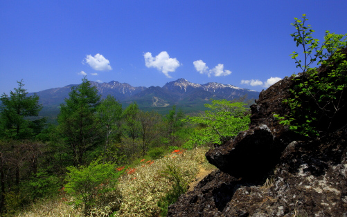 獅子岩展望台から残雪の八ヶ岳と初夏の森を望む