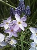 メイcの花