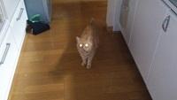 金環日食風猫
