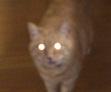 金環日食ネコ