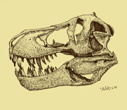 ティラノサウルス 頭蓋骨 ペン2