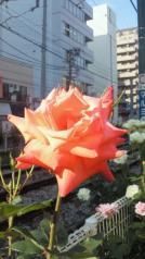 201205211629000.jpg