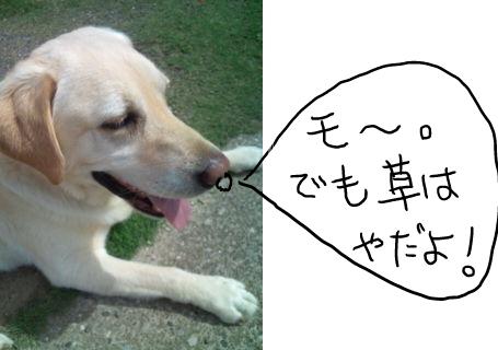 2011062412505.jpg