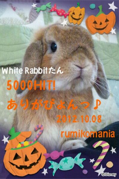 CA625RCO_convert_20121010155759.jpg
