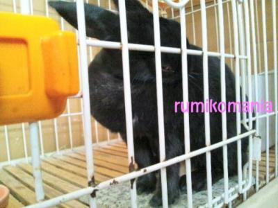 CAK8VE37_convert_20120913185230.jpg