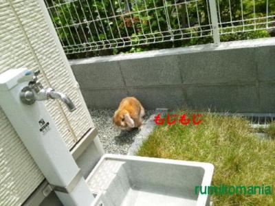 CAX81EJF_convert_20120611124851.jpg