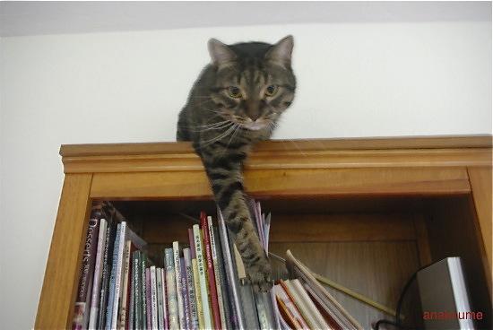 本棚の上でも3