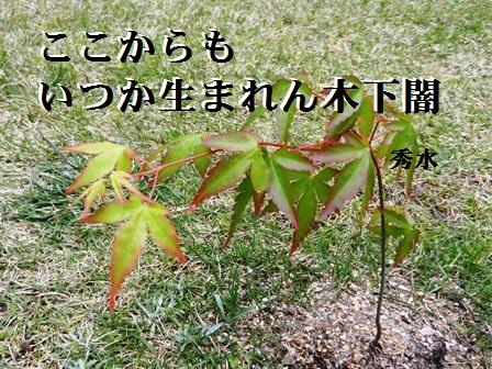 koshitayami.jpg