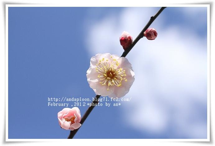 20120224_0045_20120302171011.jpg