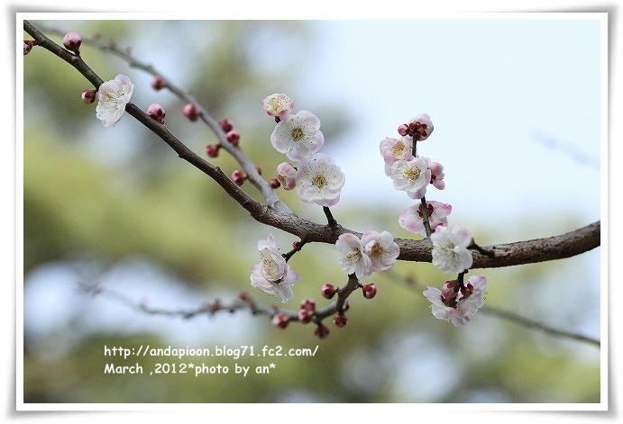 20120306_1254.jpg