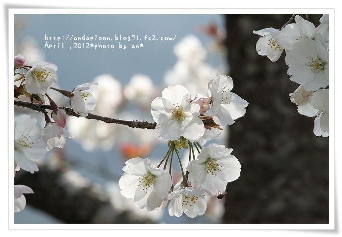 20120408_6271.jpg