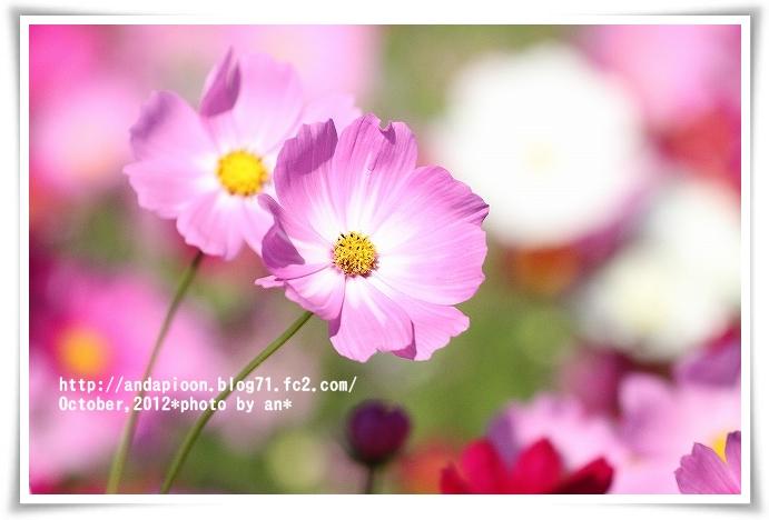 20121019_2643.jpg