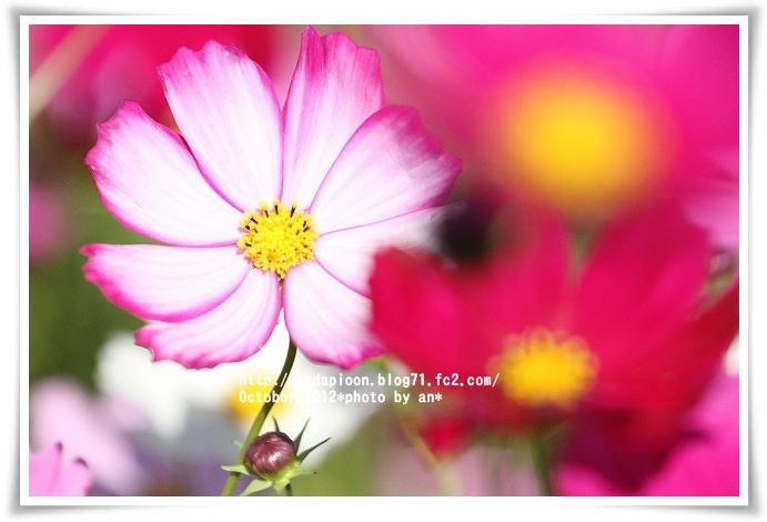 20121019_2668.jpg