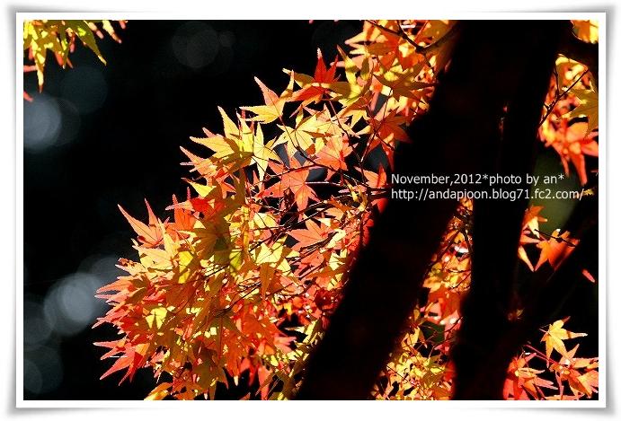 20121119_0108.jpg