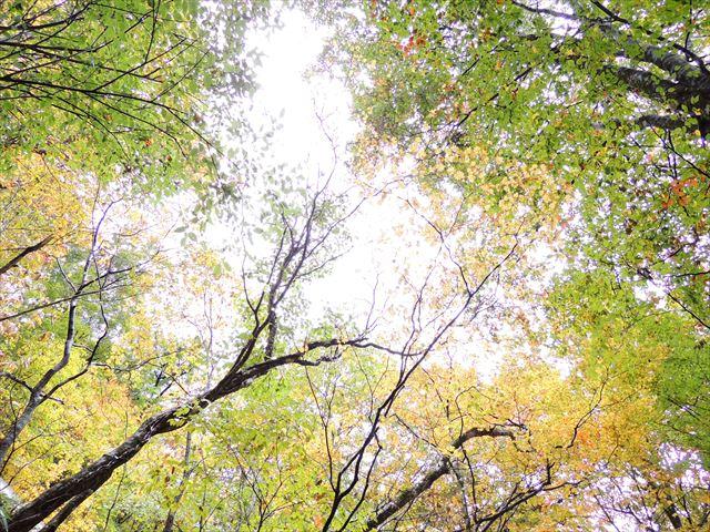 11月5日写真 099_R