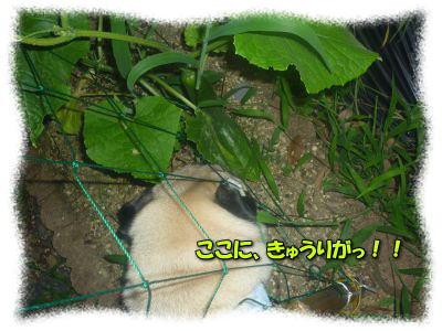 image13_20110817122639.jpg