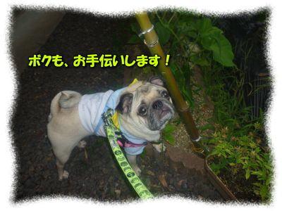 image14_20110817122639.jpg