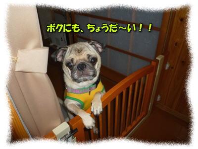 image18_20110817125120.jpg
