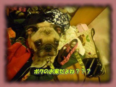 image1_20110831015800.jpg