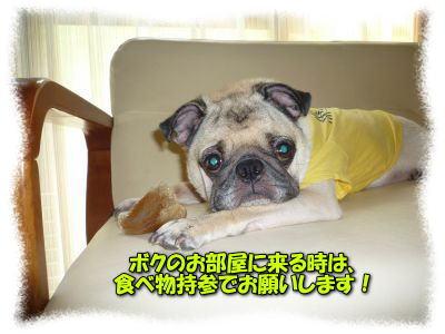 image25_20110817134712.jpg