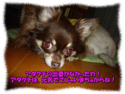 image26_20110817140249.jpg