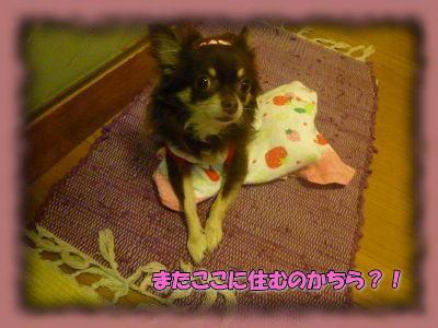 image2_20110831015759.jpg