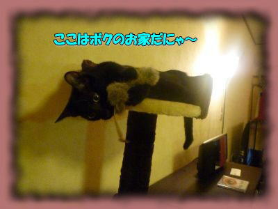 image3_20110831015759.jpg