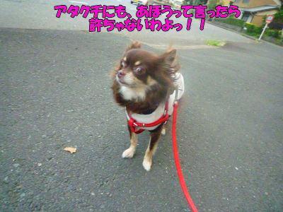 image4_20110823015644.jpg