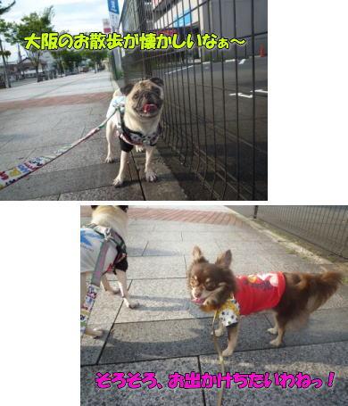 image4_20110825122252.jpg
