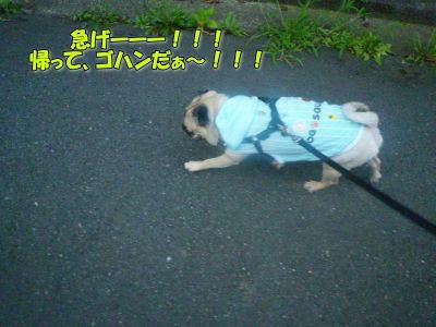 image7_20110823020036.jpg