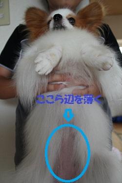b201208118.jpg