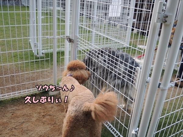 DSCN570020130924.jpg