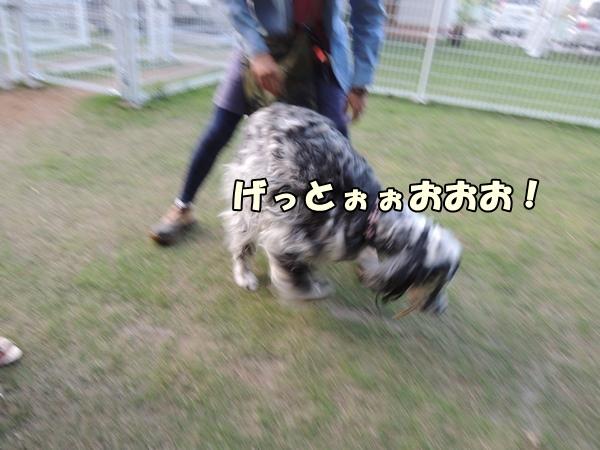 DSCN570420130924.jpg