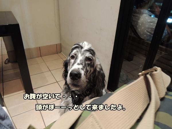 DSCN571020130924.jpg