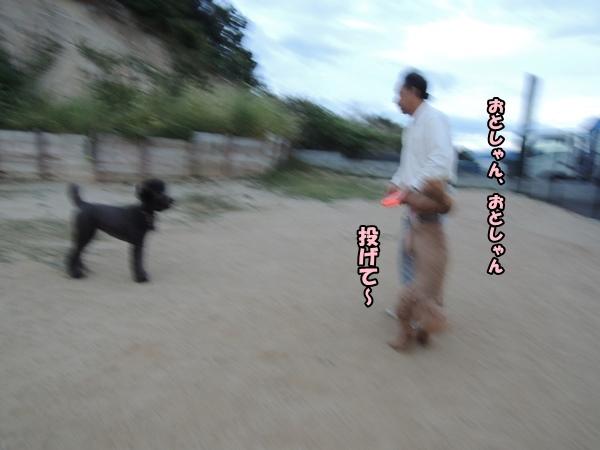 DSCN587820131009.jpg