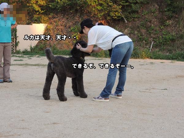 DSCN605920131015a.jpg