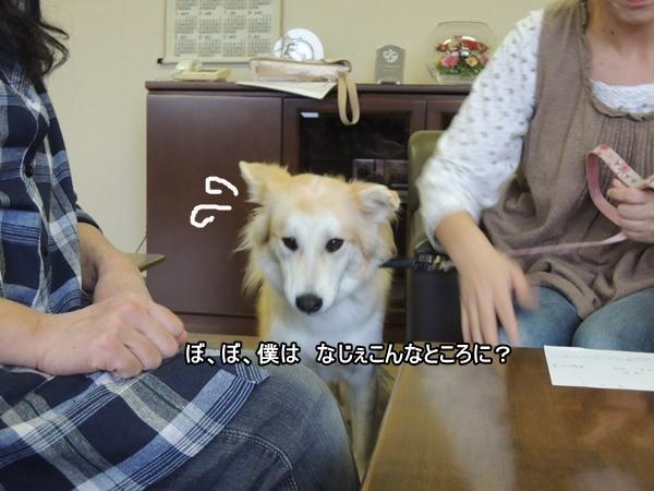 DSCN614920131020.jpg