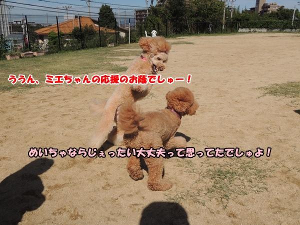 DSCN620120131019.jpg