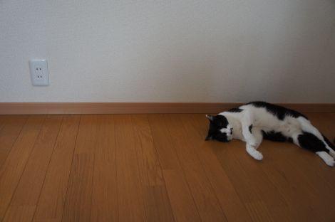 無気力猫1