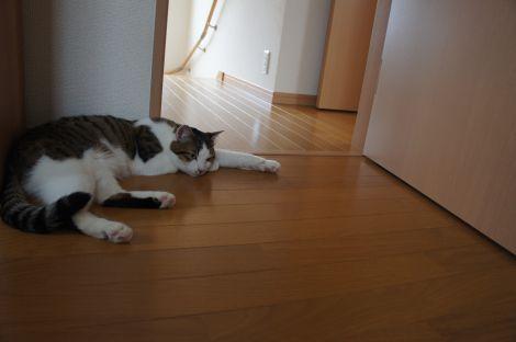 無気力猫2